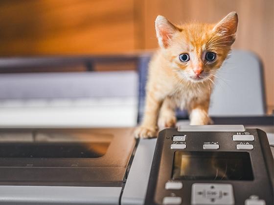 Sublimujesz? Nie kupuj kota w worku!